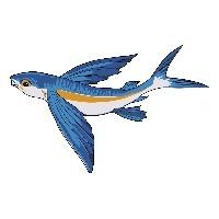 nmflyingfish's Avatar